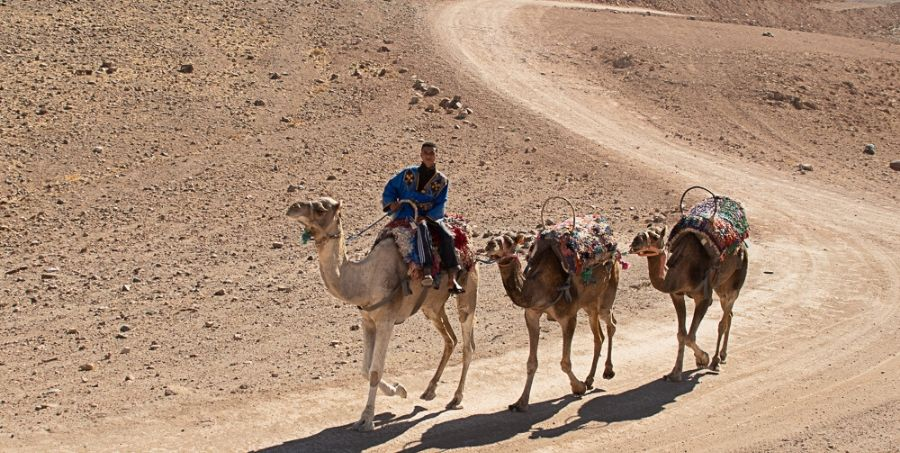 Camel Ride in Morocco TD active Holiday